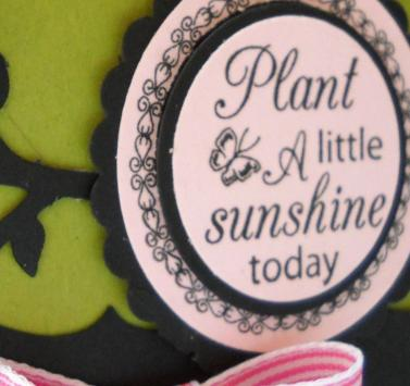plant-sunshine-box-closeup.jpg